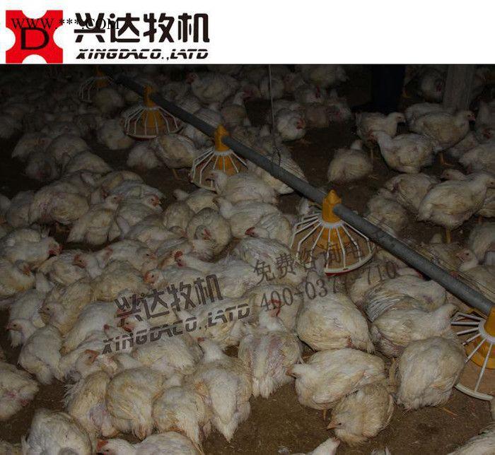 网上白羽鸡专用自动料线 自动化养鸡设备 平养肉鸡养殖设备