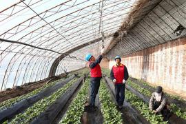 國網阜新供電公司:電氣化助力 興了產業富了鄉村